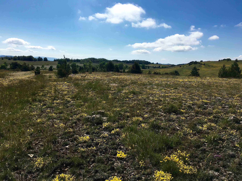 La camp de l'hopitalet découverte fleurs 1