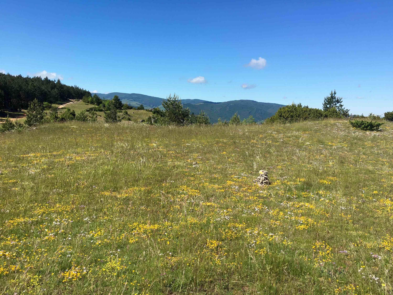 La camp de l'hopitalet découverte fleurs 2