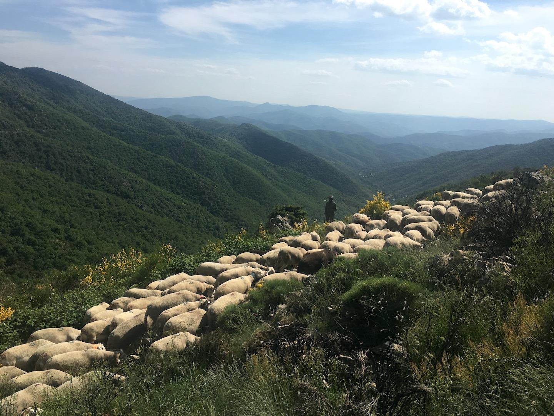 Troupeau de mouton devant la statue du berger