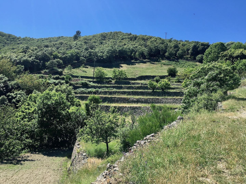 Bancles cultivés de la ferme du Mercou