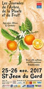 Affiche agrumes